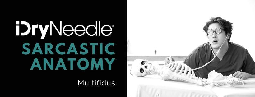 Sarcastic Anatomy - Multifidus